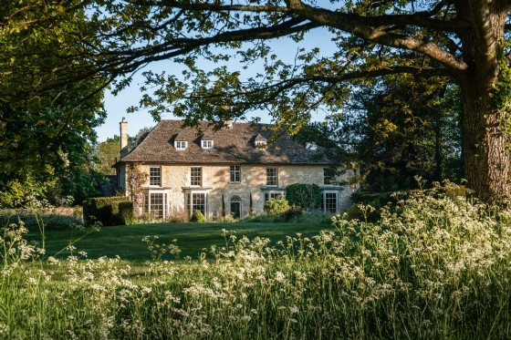 Dandelion, Kempsford, Cirencester, Gloucestershire, The Cotswolds, UK